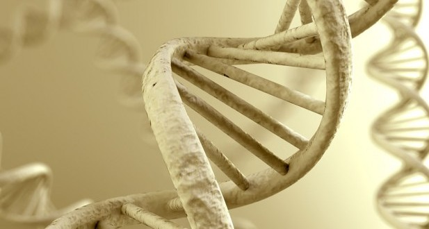 ancientDNA (1)